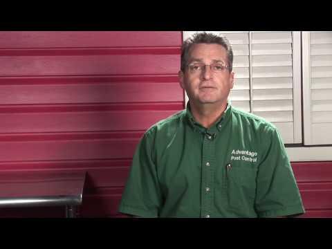 Pest Control : How Do I Get Rid of Stink Bugs?