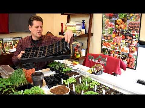 Gardening 101 Ep1: Indoor Vegetable Seed Starting Basics: Seeds, Starting Supplies & Lighting