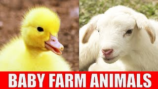 BABY FARM ANIMALS - Names of Animal Babies at the Farm in English