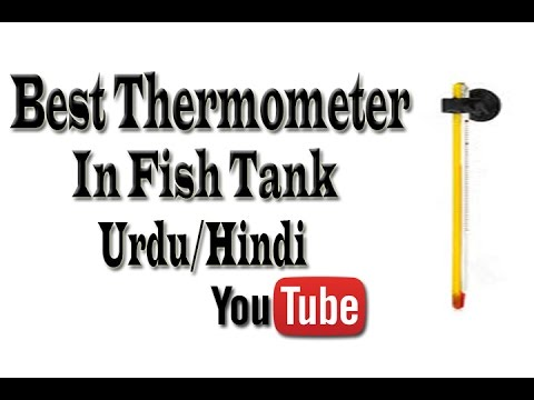 Best Thermometer Used in Fish Tank Urdu/Hindi