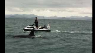 Killer Whales chase Jetski while Fishing