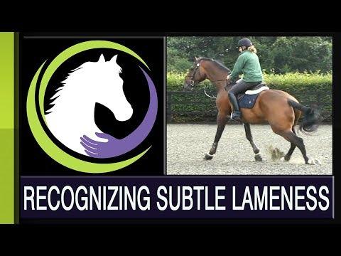 Recognizing Subtle Lameness - Part One of a Four Part Series