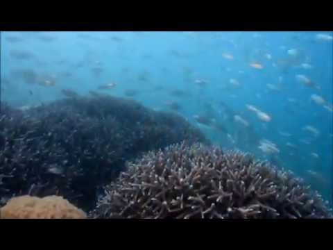 Snorkeling off Daydream Island