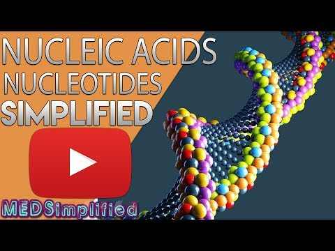 Nucleic acids - DNA and RNA structure