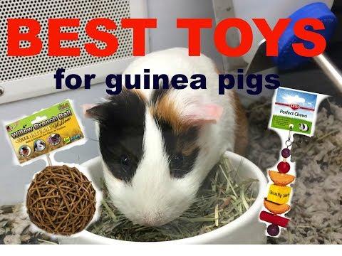 BEST GUINEA PIG TOYS!!!(my favorite)