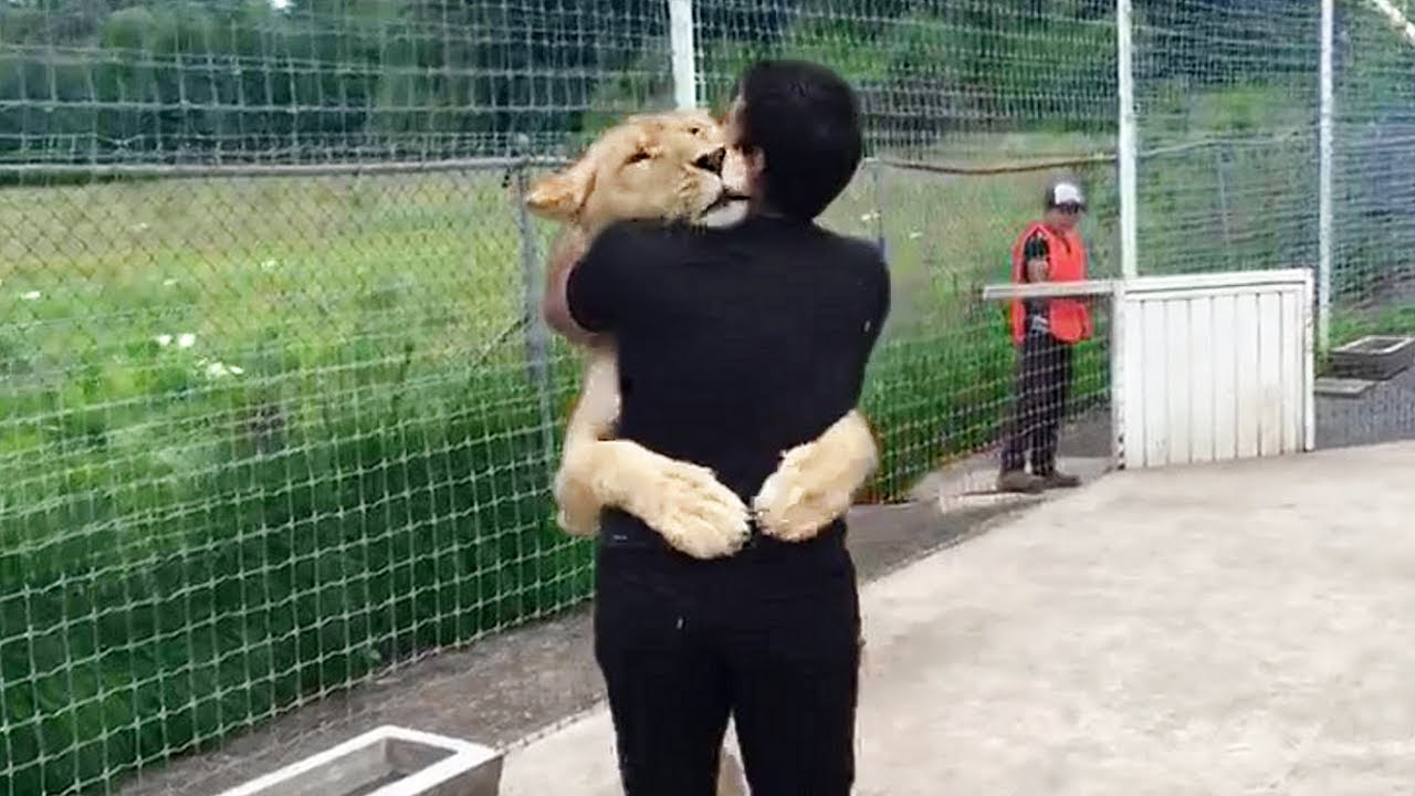Lion Sees Her Adoptive Dad After 7 Years...