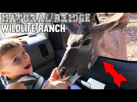 WILD ANIMALS IN OUR CAR IN REAL LIFE!!