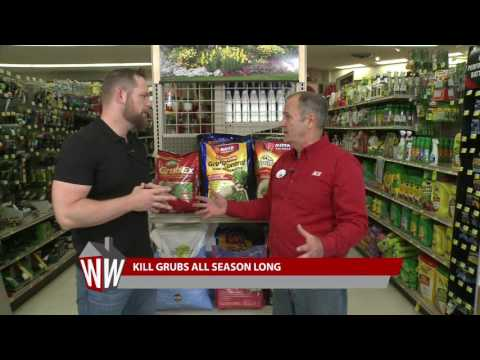 How to Combat Grubs with Ace Hardware