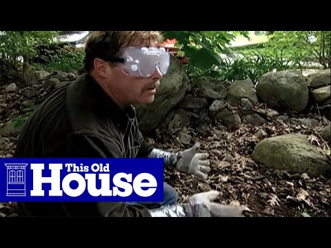 How to Clear Poison Ivy - This Old House