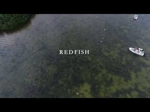 Crazy Redfish in Tampa Bay!