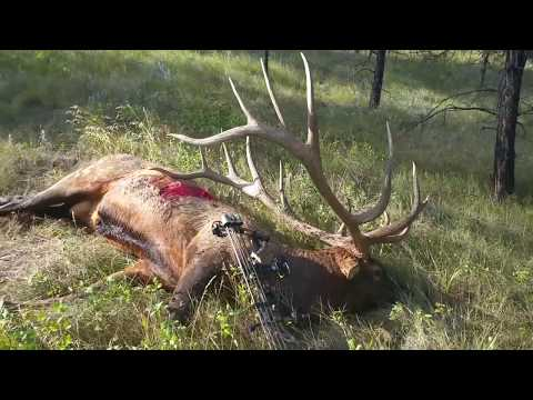 The World-Record Archery Elk