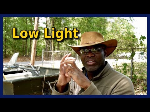 Best Cameras for Fishing Videos in Low Light