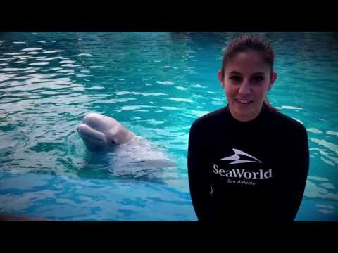Checking in with Kenai   SeaWorld®