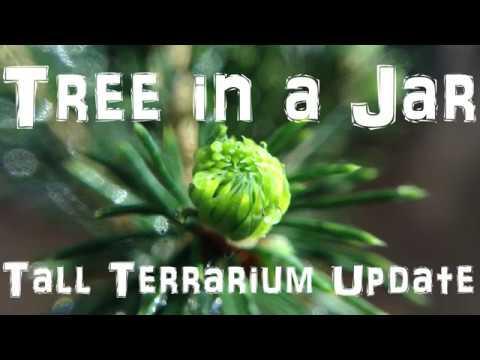 Tree in a Jar - Tall Terrarium Update