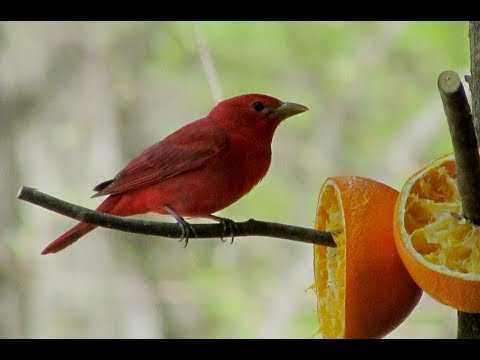 Identifying Not-So-Typical Birds in Kentucky (and How to Attract Them!)