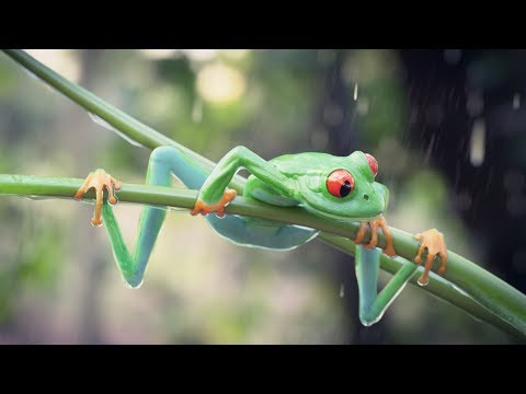 Part 2. 3D Modeling Frog in Blender. Cycles. Time-lapse