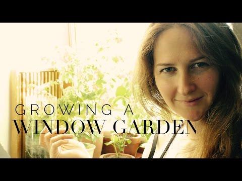 Window Gardening on How to Grow a Garden with Scarlett