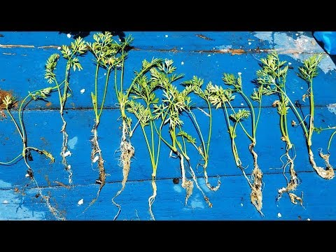 How To Get 10x More Seedlings Out Of Your Nursery 6-Packs