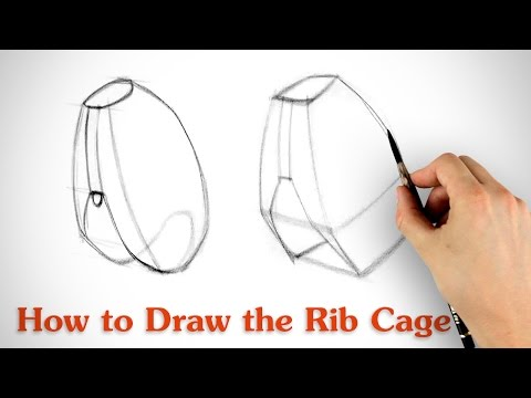 How to Draw the Rib Cage - Human Anatomy for Artists