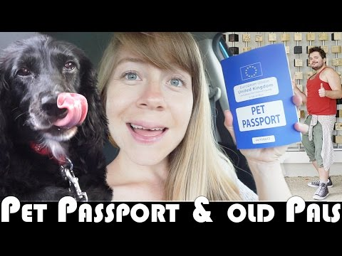 GETTING A PET PASSPORT & OLD PALS! - MOVING TO PORTUGAL DAILY VLOG (ADITL EP393)