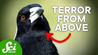 7 of Australia
