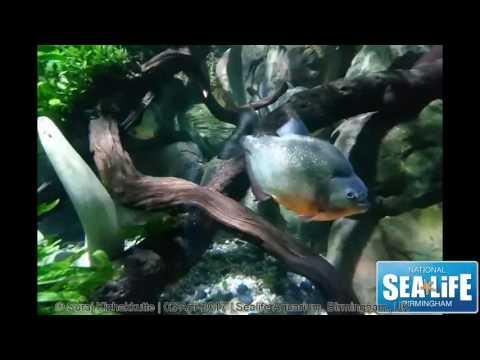 Sealife aquarium Birmingham, UK