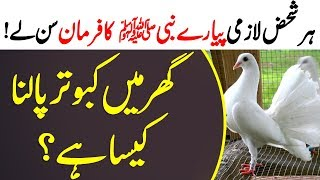How is pigeon breeding at home? | According to the Prophet saw | kabootar | Pigeon breeding
