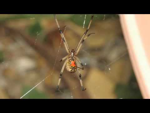 New Mexico Spiders - High Noon Pest Control Can Get Rid Of Your Albuquerque Spider Problem!