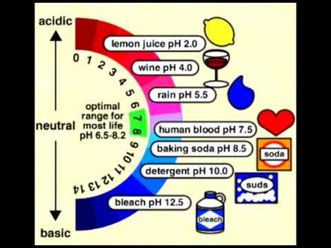 Body Ph levels for golden health