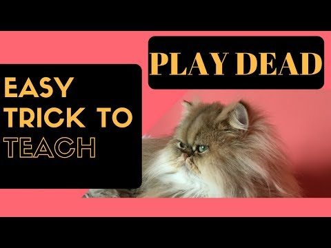 How to Teach Your Cat To Play Dead