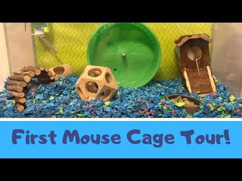 FIRST MOUSE CAGE TOUR!