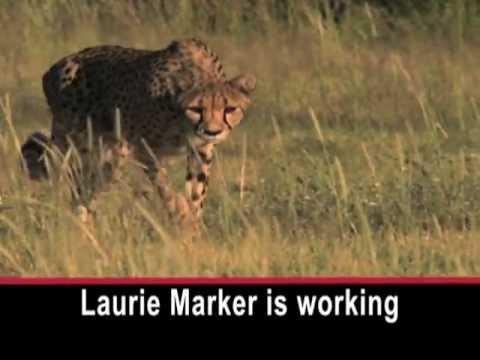Progress in Race to Save Cheetahs