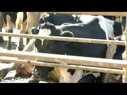 Mad Cow Disease Found In California: What Are The Risks To Humans