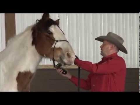 Teaching Your Horse to Accept Clippers