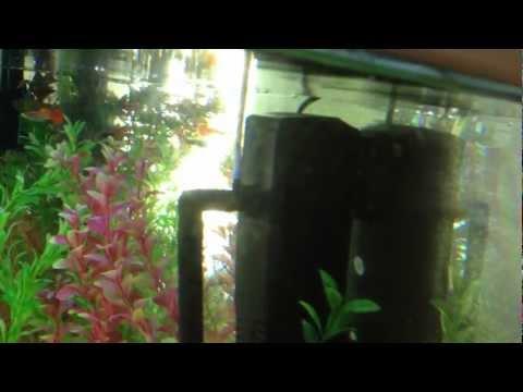 fish tank - small carbon filter air pump