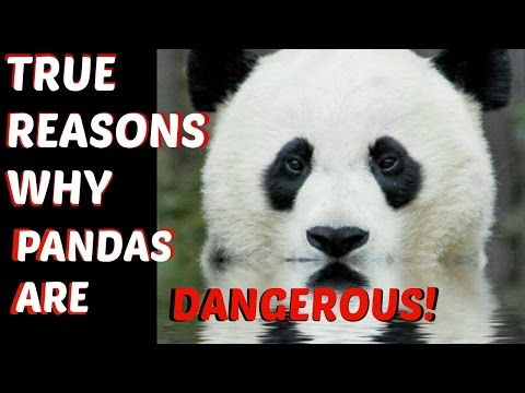 TRUE REASONS WHY PANDAS ARE DANGEROUS!