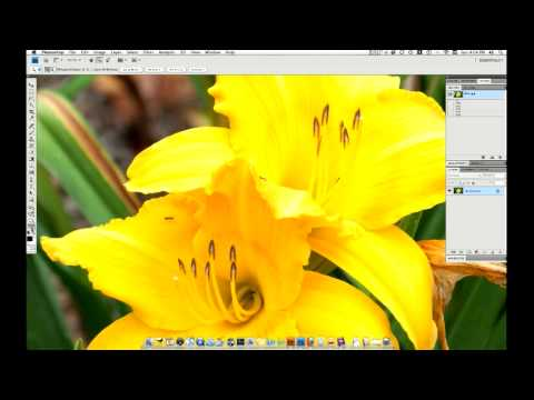 Photoshop CS4 Zoom, Pan and Navigate