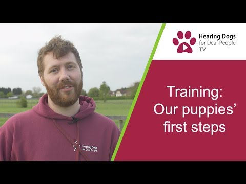 Hearing Dogs TV S2 E3: Our puppies' first training steps
