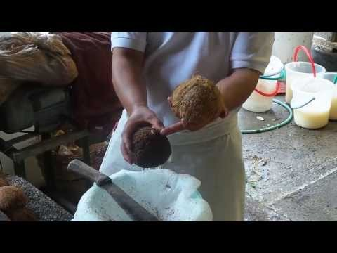 Weekend at The Farm: Oil of Life Tour (Extracting The Coconut Cream and Coconut Milk)