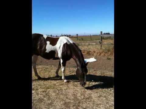 Geldings Talking - Special Horse Whisperer Rope Halter- Roper 2 of 3 - Natural Horsemanship
