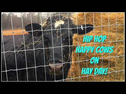 Hip Hop Happy Cows on Hay Day!~
