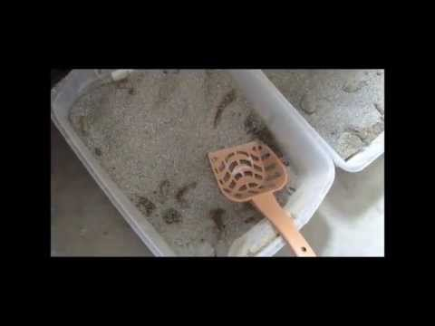 How to Clean Kitty Litter in 10 Seconds