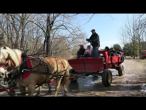 Kortright Park Vaughan - Maple Syrup Festival and Things To Do