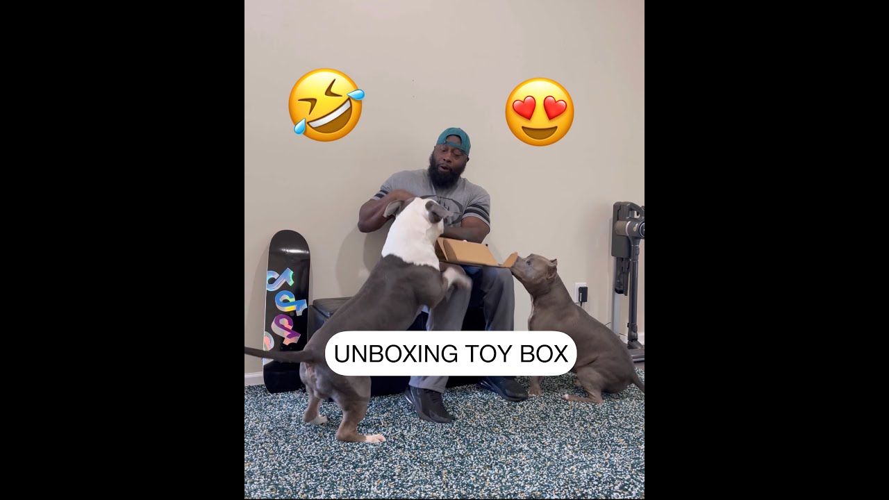 Unboxing my dogs' toy box to see their reactions (February Love Theme) 🥰😂