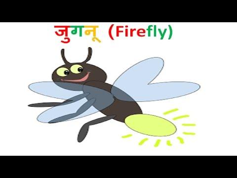 जुगनू कैसे चमकते हैं?   How fireflies glow?   Hindi