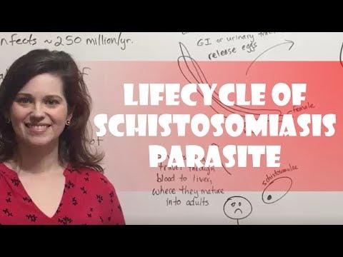 Lifecycle of Schistosomiasis Parasite