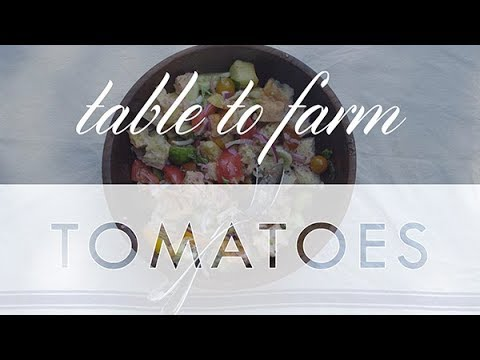Table to Farm Tomatoes