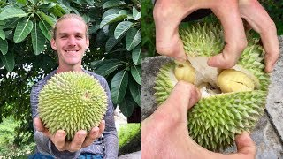 How To Open and Eat a Durian