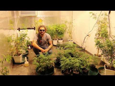 Documentary: Foliar Feeding Plants | Cannabis Foliar Feeding