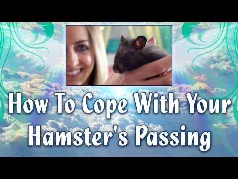 How To Cope With Your Hamster's Passing